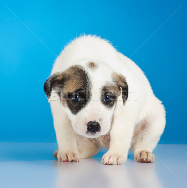 shy and scared little stray puppy  Stock photo © feedough