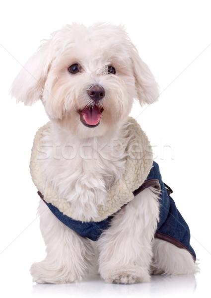 Glimlachend camera cute kleding portret Stockfoto © feedough