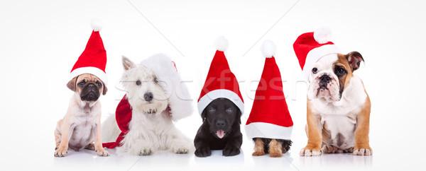 five little dogs wearing santa claus hats Stock photo © feedough