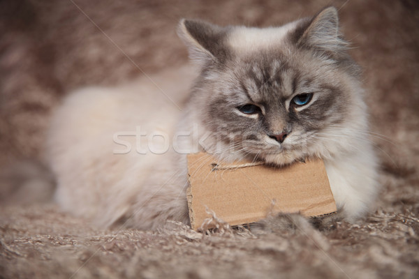 sad little cat wearing a blank sign at its neck Stock photo © feedough