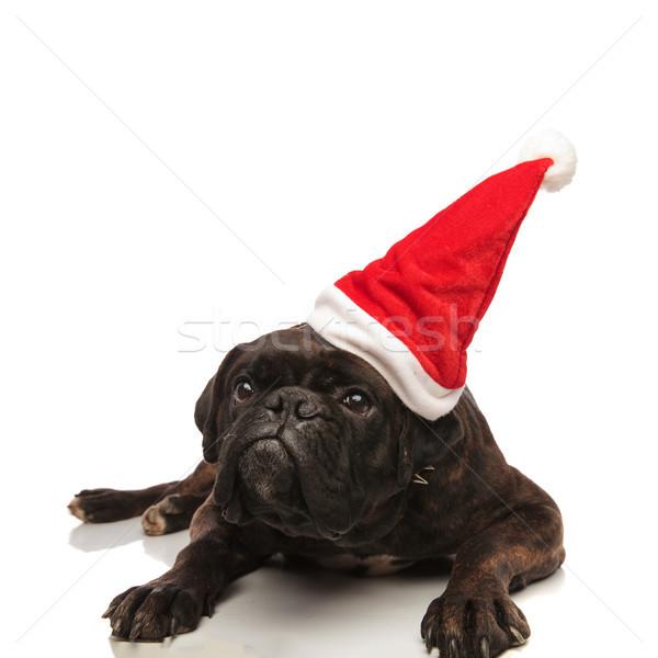 Cute boxeador cachorro ojos Foto stock © feedough