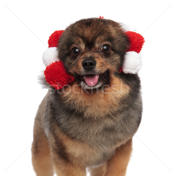 close up of cute panting pom with soft balls headband Stock photo © feedough