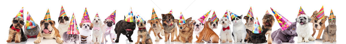 many happy pets wearing birthday hats, sunglasses and bowties Stock photo © feedough