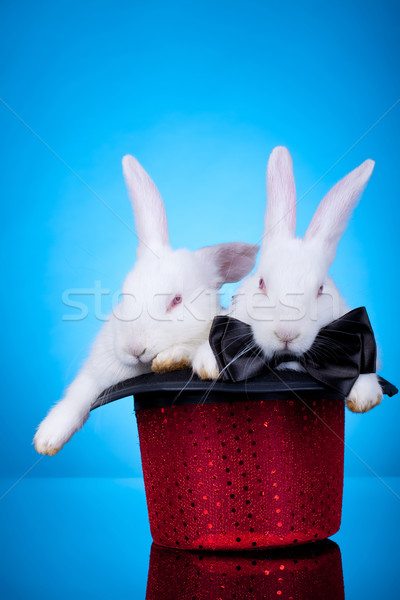 rabbits in a hat Stock photo © feedough
