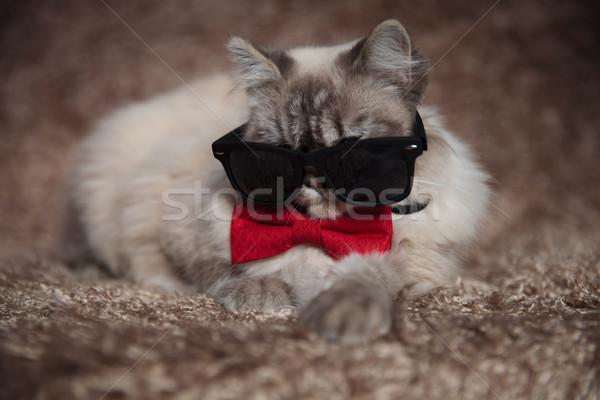 Serin gangster kedi güneş gözlüğü kırmızı Stok fotoğraf © feedough