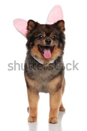 Heureux brun lapin de Pâques oreilles permanent haletant Photo stock © feedough