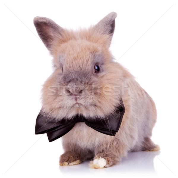 Gentiluomo coniglio adorabile guardando fotocamera bianco Foto d'archivio © feedough