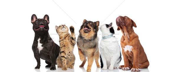 five curious pets look up on white background Stock photo © feedough