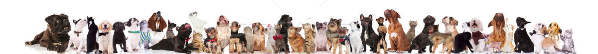 group of mixed pets looking up on white background Stock photo © feedough