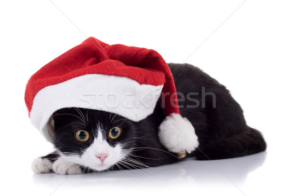 christmas cat Stock photo © feedough