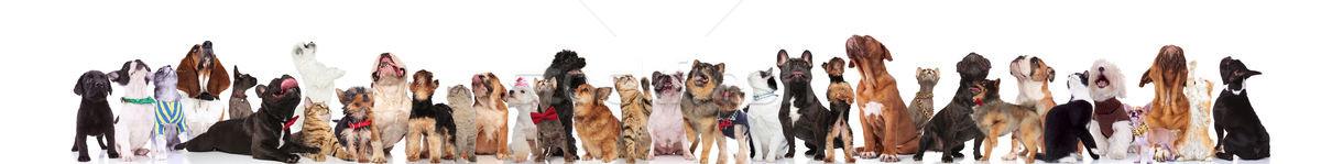Veel nieuwsgierig huisdieren opkijken permanente Stockfoto © feedough