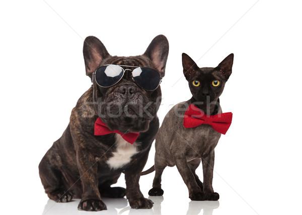 Elegáns macska kutya pár visel ül Stock fotó © feedough