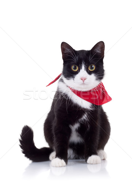 black and white cat with red scarf Stock photo © feedough