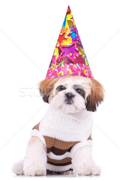 shih tzu puppy wearing a party hat  Stock photo © feedough