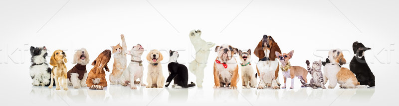 large group of curious dogs and cats looking up Stock photo © feedough