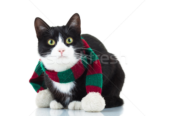 cute cat wearing knitted christmas scarf Stock photo © feedough