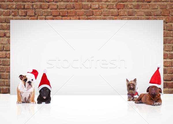 犬 着用 サンタクロース 看板 ストックフォト © feedough