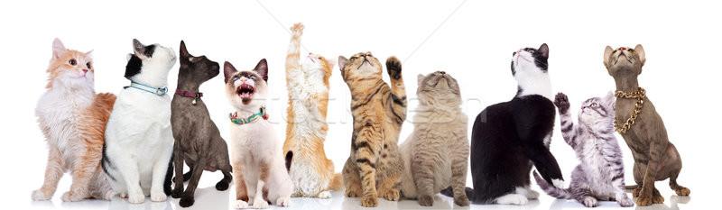 Grupo diez cute gatos hasta Foto stock © feedough