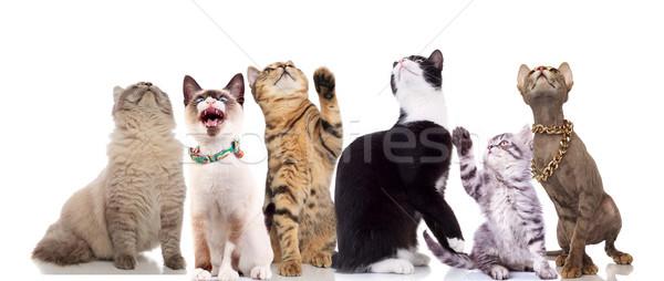 Squadra singolare gatti up seduta Foto d'archivio © feedough