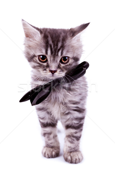cat wearing a black neck bow Stock photo © feedough
