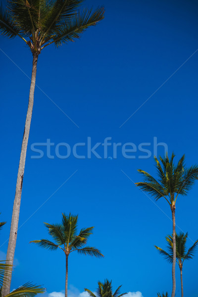 palm trees against blue sky with the little moon  Stock photo © feedough