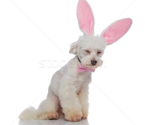 Assonnato elegante coniglio pasquale orecchie seduta rosa Foto d'archivio © feedough