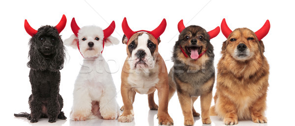 Cinco cute diablo perros diferente sesión Foto stock © feedough