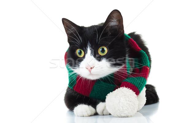 кошки трикотажный красный зеленый шарф Сток-фото © feedough
