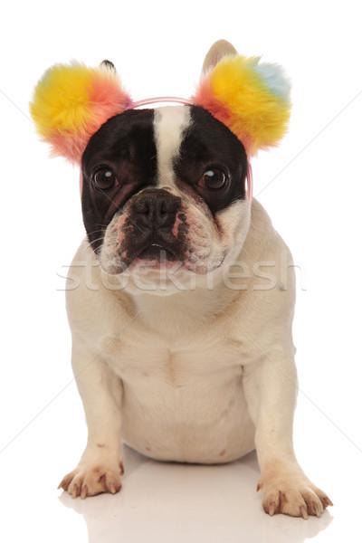 sitting french bulldog wearing a lovely colored headband Stock photo © feedough