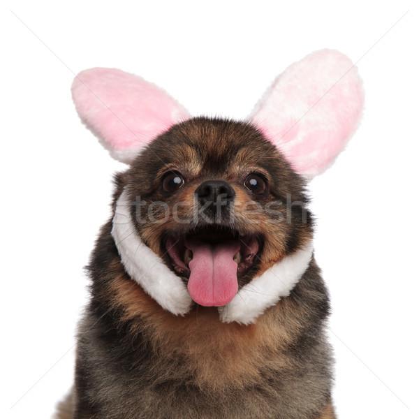 Közelkép imádnivaló zihálás rózsaszín nyúl fülek Stock fotó © feedough