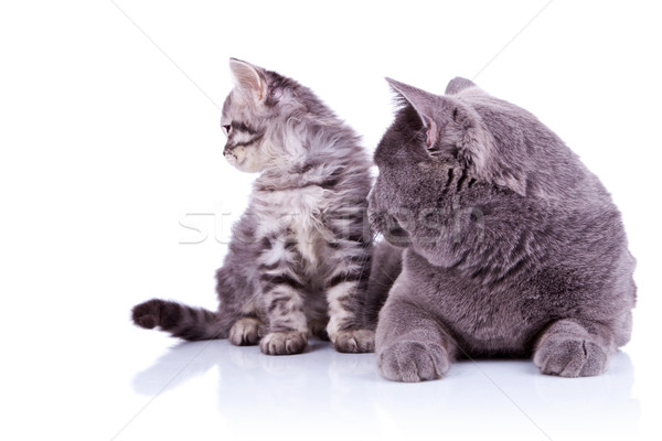 side view of two cats Stock photo © feedough