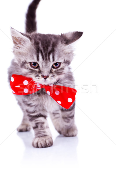 cat walking with a big red neck bow Stock photo © feedough