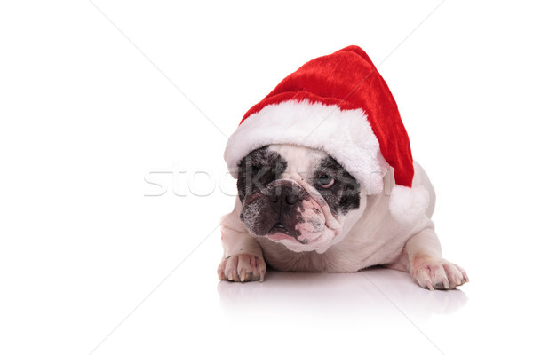 french bulldog wearing santa claus red hat Stock photo © feedough