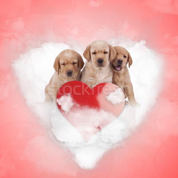 Drie aanbiddelijk labrador retriever puppies vergadering hart Stockfoto © feedough
