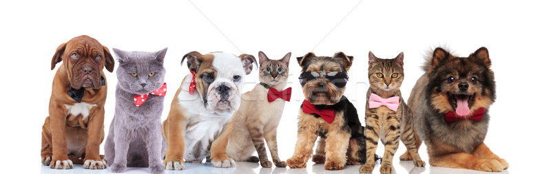Foto d'archivio: Elegante · gruppo · cute · animali · occhiali · da · sole · piedi
