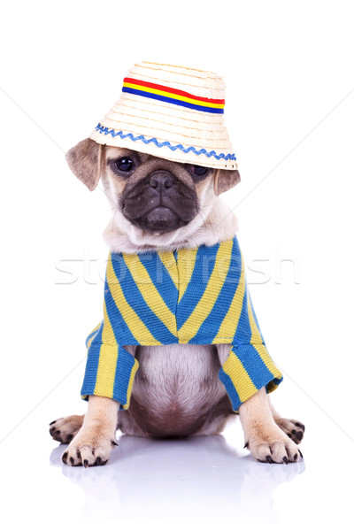 dog sitting wearing clothes and hat Stock photo © feedough