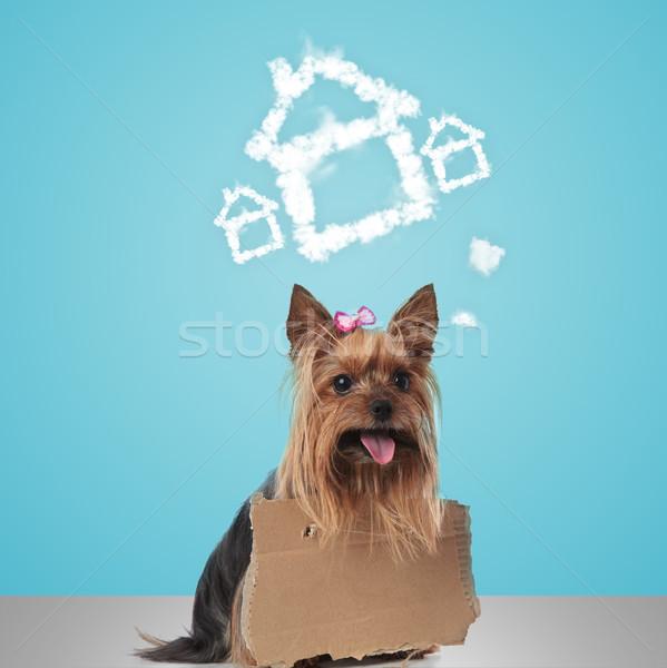 Yorkshire terrier signe rêves nouvelle maison Photo stock © feedough