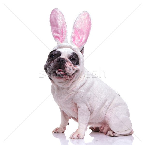 Gelukkig ester bunny frans bulldog vergadering Stockfoto © feedough