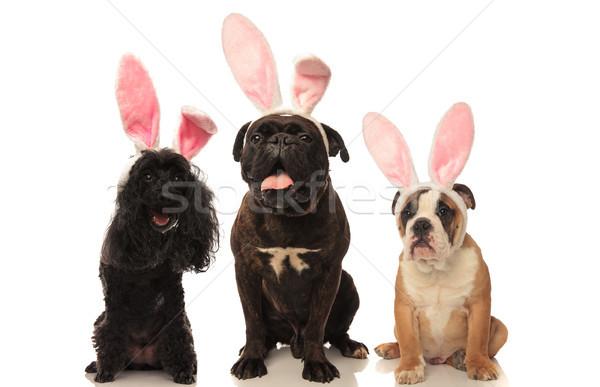 три счастливым сидящий собаки Пасхальный заяц Сток-фото © feedough