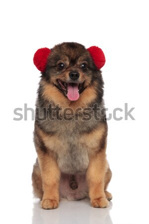 lovely brown pom sitting with red earmuffs on head Stock photo © feedough