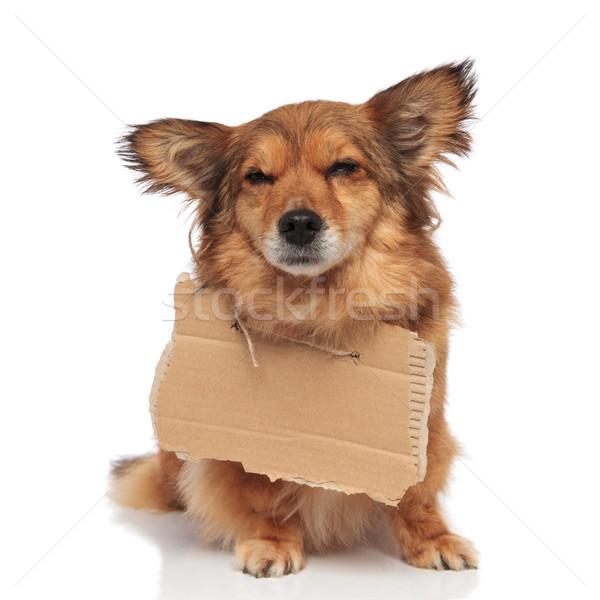 Brun triste mendiant chien vide carton Photo stock © feedough