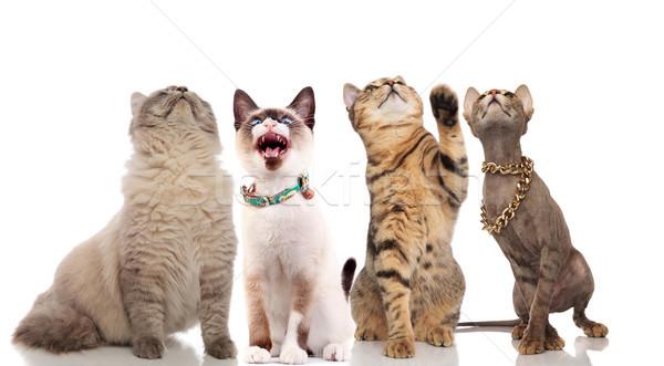 группа смешные любопытный кошек вверх Сток-фото © feedough