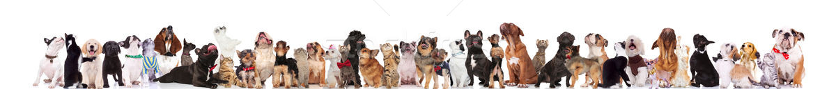 adorable large group of curious pets look up Stock photo © feedough