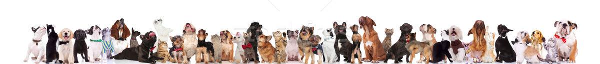 çok güzel büyük bir grup meraklı Evcil aramak ayakta Stok fotoğraf © feedough