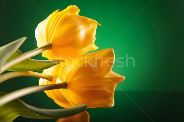 three beautiful yellow tulips on a reflective table Stock photo © feedough