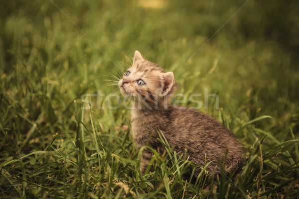 little baby cat looking very sad  Stock photo © feedough