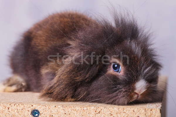 Cute лев голову кролик Bunny глядя Сток-фото © feedough