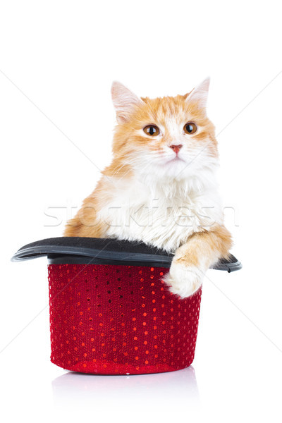 furry orange cat sits in a red hat Stock photo © feedough