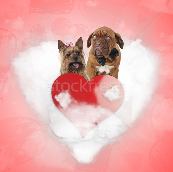 couple of cute in love dogs on a heart cloud Stock photo © feedough