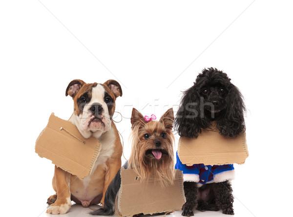 Három hajléktalan kutyák visel feliratok vár Stock fotó © feedough